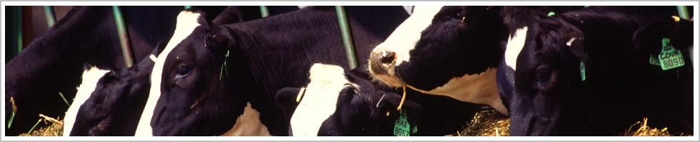 images/slides/cows.jpg